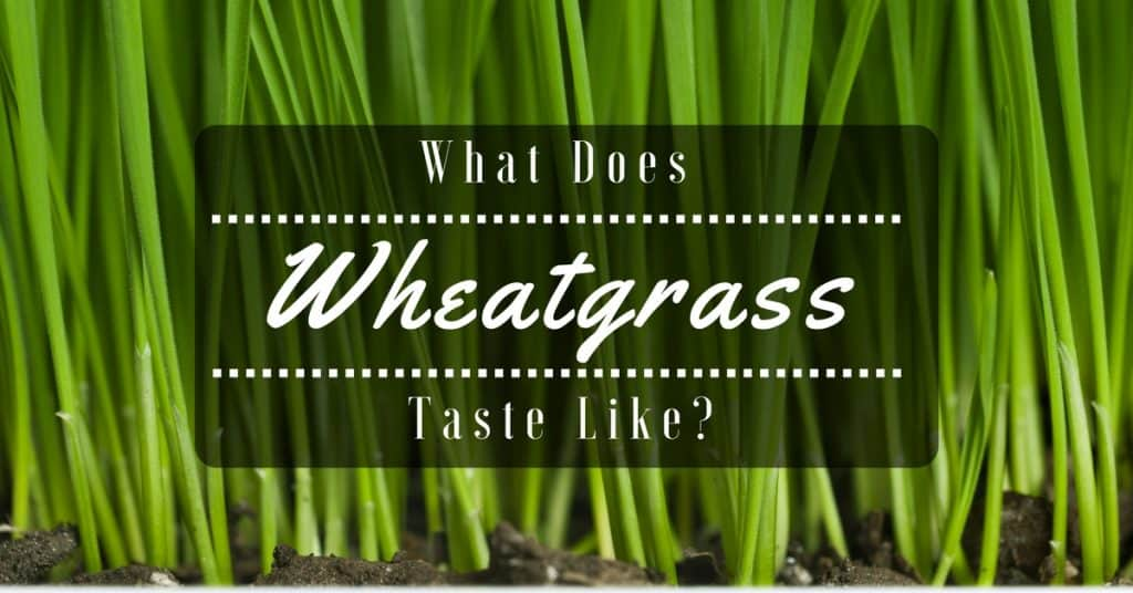 The Amazing Truth On Wheatgrass: What Does Wheatgrass Taste Like?