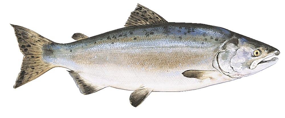 pasta-al-salmone